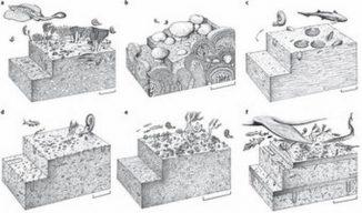 Schematische Rekonstruktionen von verschiedenen marinen Ökosystemen nach dem Massenaussterben am Ende des Perm. (Drawings Copyright by John Sibbick)