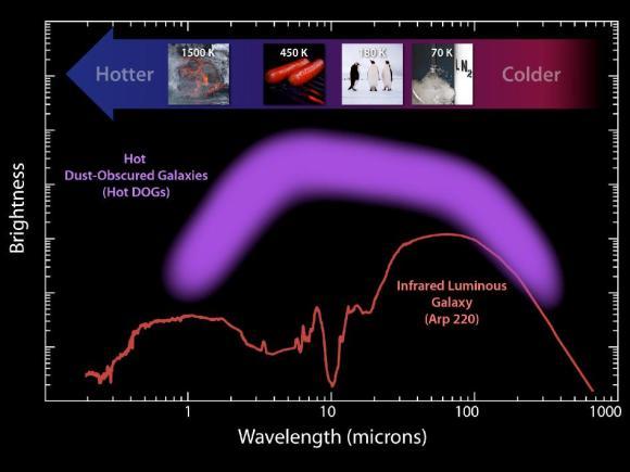 """Diese Darstellung zeigt die Helligkeit der neuen""""Hot DOGs""""-Population im Vergleich zu einer anderen infrarothellen Galaxie. (NASA / JPL-Caltech / UCLA)"""