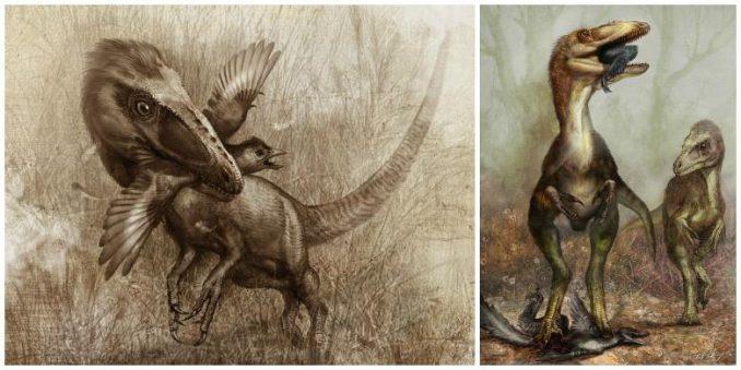 Künstlerische Darstellungen eines Sinocalliopteryx bei der Jagd auf einen Confuciusornis (links) und einen Sinornothosaurus (rechts). (Artwork: Cheung Chungtat)