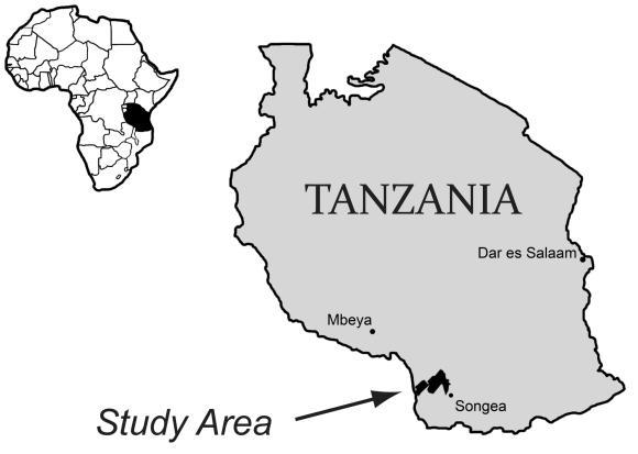 Fundort der versteinerten Knochen in Tansania. (University of Washington)