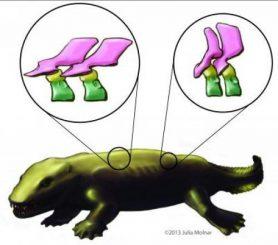 Künstlerische Darstellung des Tetrapoden Ichthyostega. Die Ausschnitte zeigen 3D-Rekonstruktionen zweier Wirbel. (Image credit: Julia Molnar)