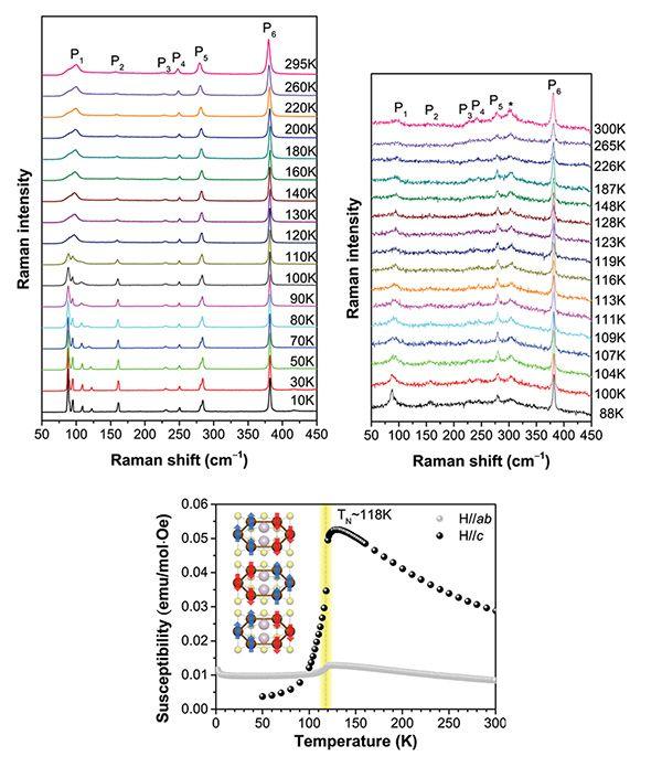 Die Raman-Spektroskopie wurde in 3D-FePS<sub>3</sub> (oben links) und 2D-FePS<sub>3</sub> (oben rechts) verwendet, um Veränderungen in den Vibrationen und damit indirekt bei der Magnetisierung zu messen. In dem Diagramm erscheinen neue Spitzen aufgrund des Eisens und der magnetischen Ausrichtung (P1 und P2) bei Temperaturen unter 118 Kelvin. Unterhalb dieser Temperatur ordnen sich die Spins (rote und blaue Pfeile)  in einem Zickzackmuster an und das Material wird antiferromagnetisch. (Credit: Institute for Basic Science)