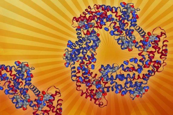 Diese photosynthetische Antenne besteht aus mehreren lichtsammelnden Pigmenten und den mit ihnen verbundenen Proteinen. (Image courtesy of the researchers (edited by MIT News))