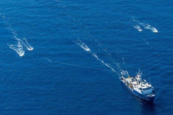 Das Forschungsschiff New Horizon der Scripps Institution zieht ein Hydrophonnetz über ein küstennahes Segment der Verwerfung. (Credit: Scripps Institution of Oceanography at UC San Diego)