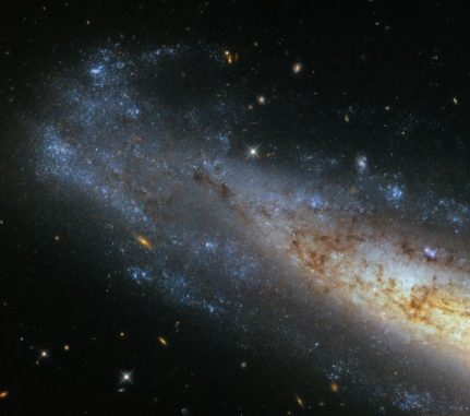 NGC 1448, aufgenommen vom Weltraumteleskop Hubble. (Credit: ESA / Hubble & NASA)