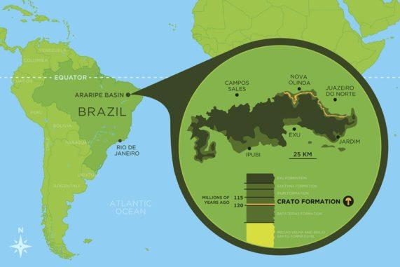 Der Fundort des fossilen Pilzes liegt im Araripe-Becken im Nordosten Brasiliens. (Credit: Graphic by Danielle Ruffatto)