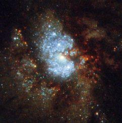 Die Zentralregion von IC 342, aufgenommen vom Weltraumteleskop Hubble. (Credit: ESA / Hubble & NASA)