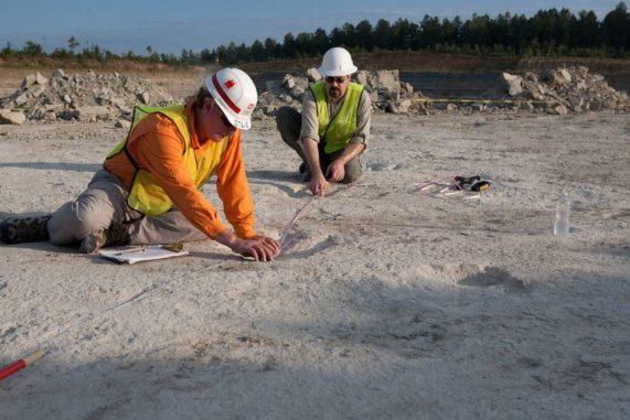 Paläontologen bei der Vermessung der Dinosaurierspuren. (Credit: Image courtesy of University of Arkansas, Fayetteville)