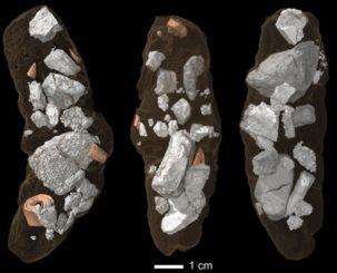 Fossile Exkremente des Archosauriers Smok wawelski in einer Synchrotronmikrotomografie. (Credits: Martin Qvarnström)