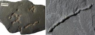 Fossile Spuren der Fortbewegung in 2,1 Milliarden Jahre altem Gestein. (Credits: A. El Albani / IC2MP / CNRS - Université de Poitiers)