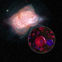 Illustration des planetarischen Nebels NGC 7027 mit Heliumhydrid-Molekülen, eine Kombination aus Helium (rot) und Wasserstoff (blau). (Credits: NASA / SOFIA / L. Proudfit / D. Rutter)