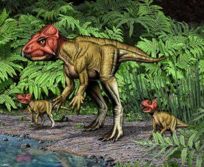 Künstlerische Darstellung des zweibeinig laufenden Auroraceratops rugosus. (Credit: Illustration: Robert Walters)
