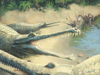 Künstlerische Darstellung der ausgestorbenen Krokodilart Mystriosaurus laurillardi. (Credits: Julia Beier)