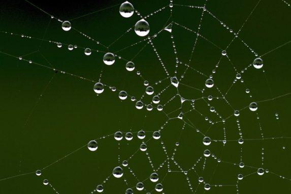 Tautropfen an einem Spinnennetz. (Credits: University of Warwick)