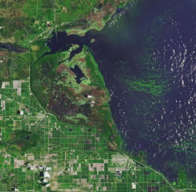 Algenblüte im Lake Okeechobee in Florida. (Credit: NASA Earth Observatory image made by Joshua Stevens, using Landsat data from the U.S. Geological Survey)