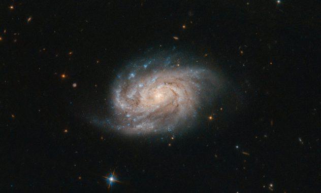 Hubble-Aufnahme der Galaxie NGC 1803. (Credits: ESA / Hubble & NASA, A. Bellini et al.)