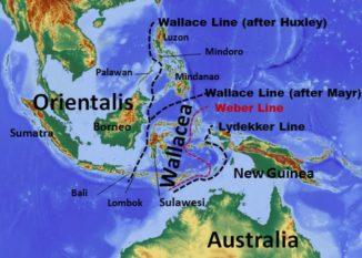Verlauf der Wallace-Linie laut Lehrbuch. (Credits: Wikipedia / User: Altaileopard / CC-BY-SA 3.0)