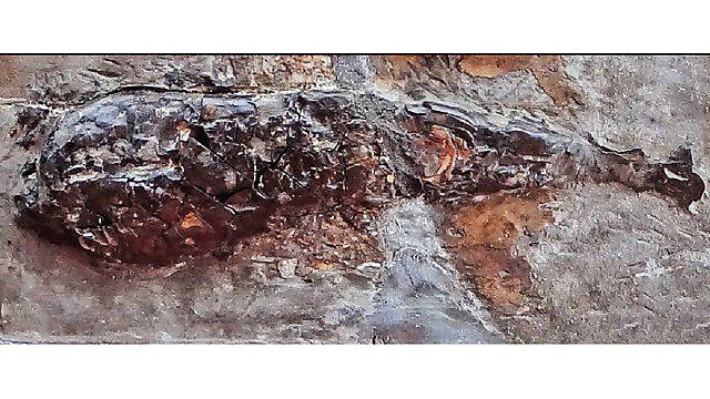 Der versteinerte Körper des tintenfischähnlichen Meerestiers. (Credits: University of Plymouth)