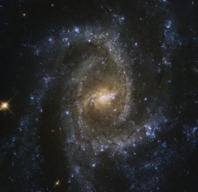 Hubble-Aufnahme der Spiralgalaxie NGC 2835. (Credits: ESA / Hubble & NASA, J. Lee, and the PHANGS-HST Team; Acknowledgement: Judy Schmidt (Geckzilla))