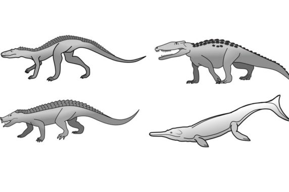 Verschiedene prähistorische Krokodilarten. (Credit: University of Bristol)