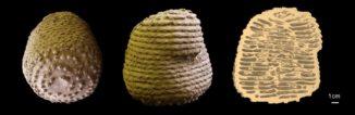 Das Innere eines Termitennests besteht aus komplexen miteinander verbundenen Ebenen und Rampen. (Credits: Image courtesy of Guy Theraulaz / Harvard SEAS)