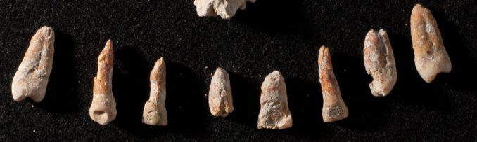 Plomben aus Jade und Pyrit in Zähnen aus einem nicht-königlichen Maya-Grab in El Palmar. (Credits: Kenichiro Tsukamoto)