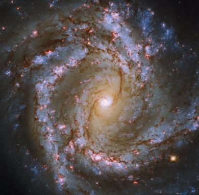 Die Spiralgalaxie M61, basierend auf Daten des Weltraumteleskops Hubble und des Very Large Telescope. (Credits: ESA / Hubble & NASA, ESO, J. Lee and the PHANGS-HST Team)