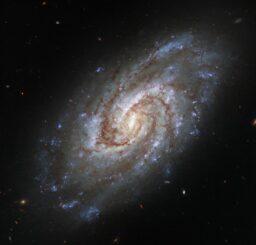 Hubble-Aufnahme der Spiralgalaxie IC 1954. (Credits: ESA / Hubble & NASA, J. Lee and the PHANGS-HST Team)