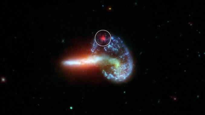 Dieses Bild zeigt die Galaxie Arp 148, basierend auf Daten der Weltraumteleskope Hubble und Spitzer. In dem weißen Kreis ist im Infrarotbereich eine Supernova zu sehen, die im sichtbaren Bereich von Staub verdeckt wird. (Credits: NASA / JPL-Caltech)