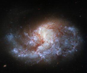 Hubble-Aufnahme der Spiralgalaxie NGC 1385. (Credits: ESA / Hubble & NASA, J. Lee and the PHANGS-HST Team)